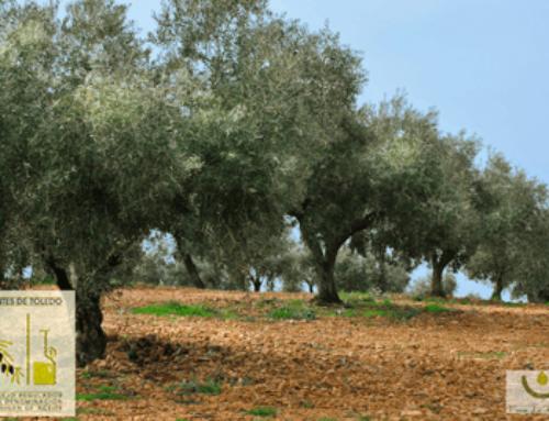 Un acercamiento a la Denominación de Origen Montes de Toledo