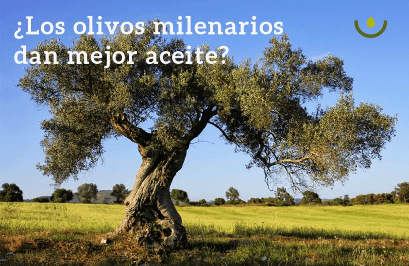 ¿Los olivos milenarios dan mejor aceite?