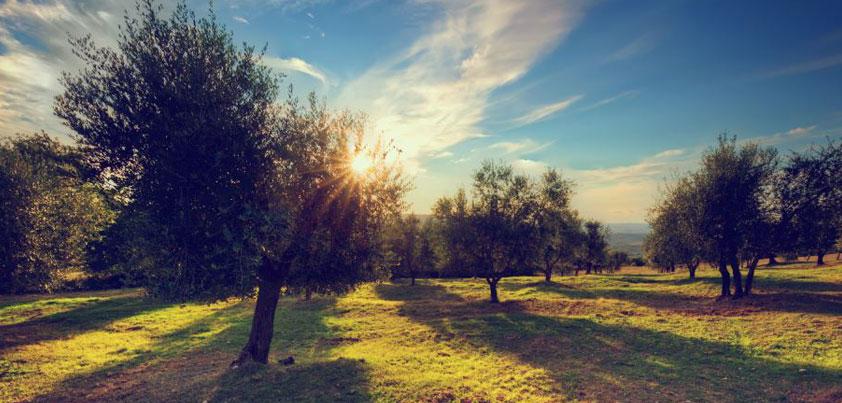 El ecosistema perfecto para un perfecto aceite de oliva ecológico